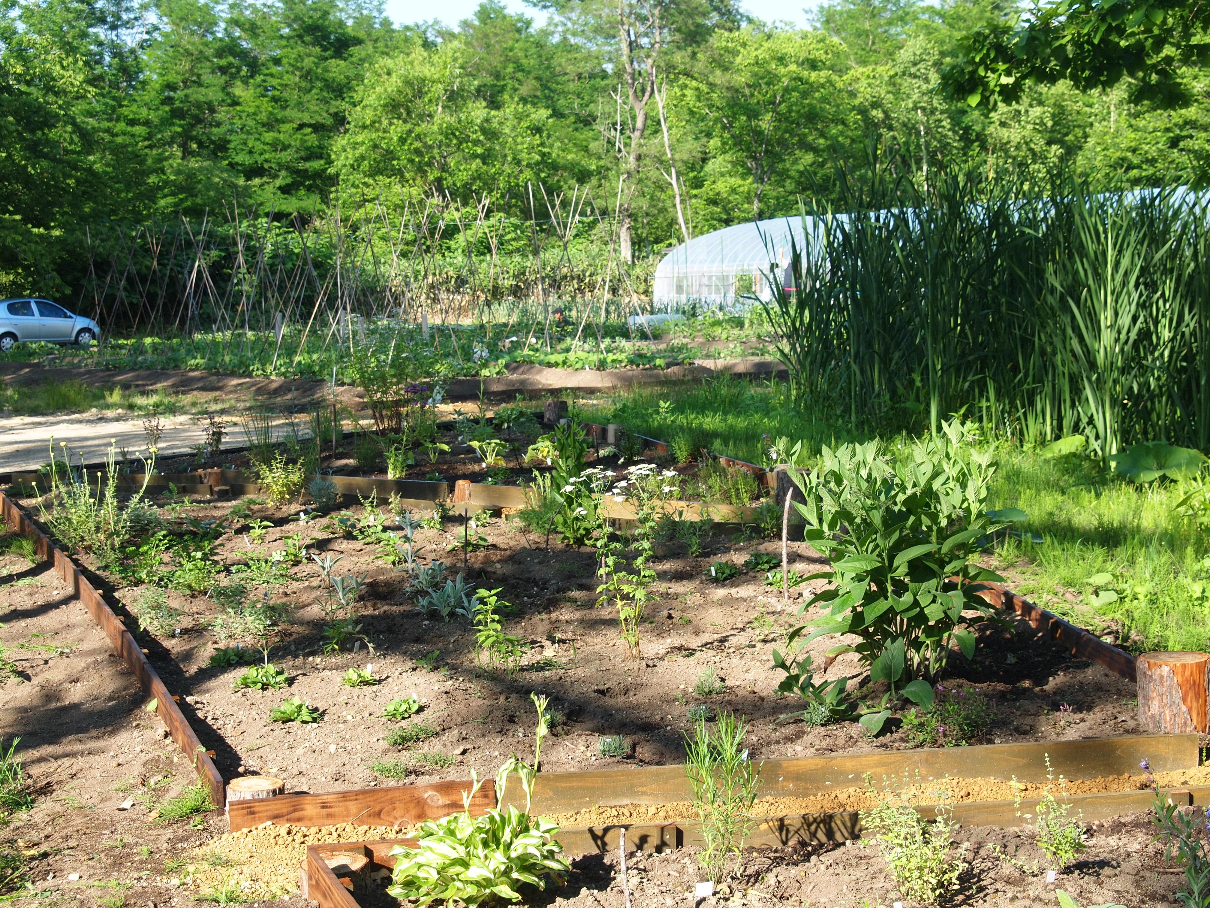 追加苗の定植とガーデン管理へ♪