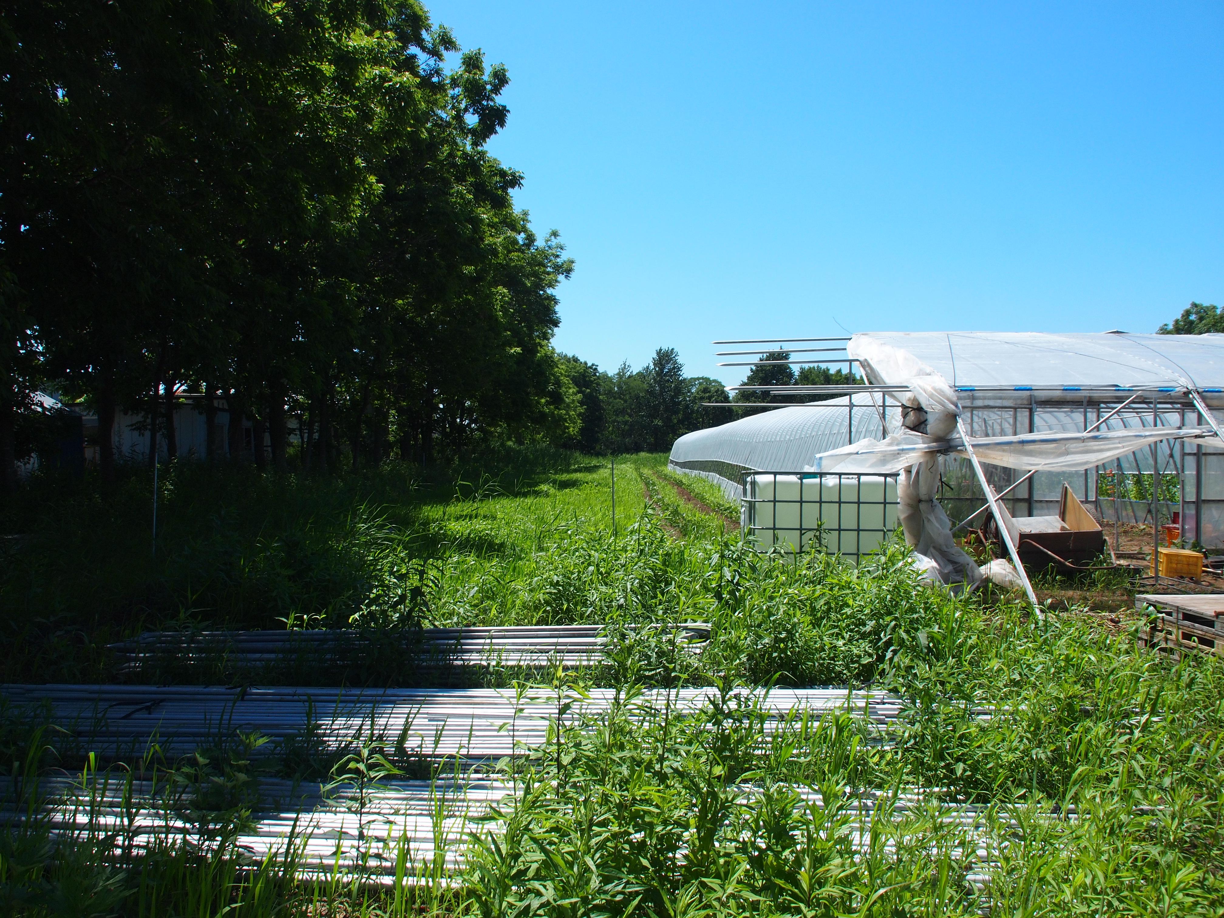 札幌市 ふれあい畑 ときの森へ♬