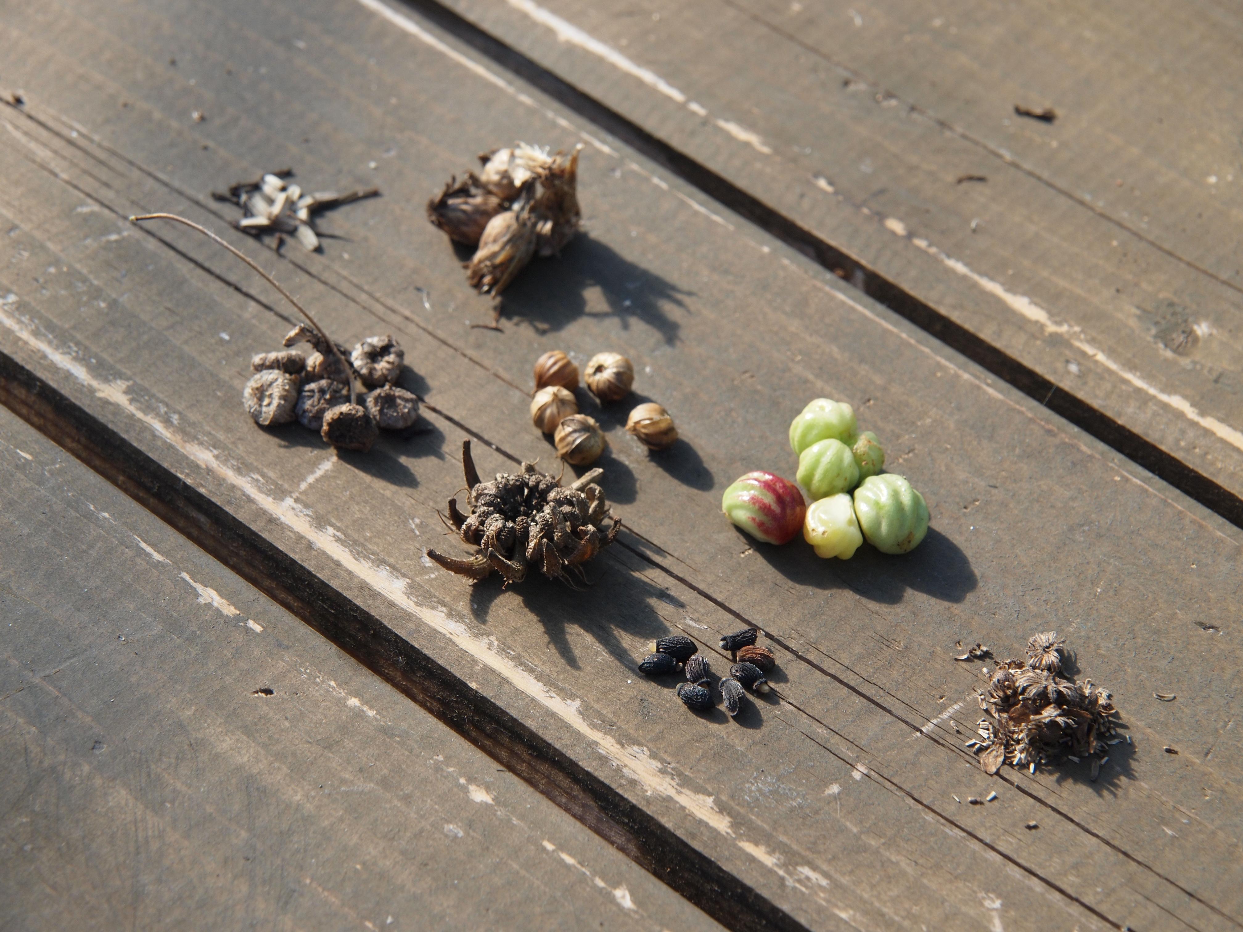 いいね!農style 種の収穫と乾燥
