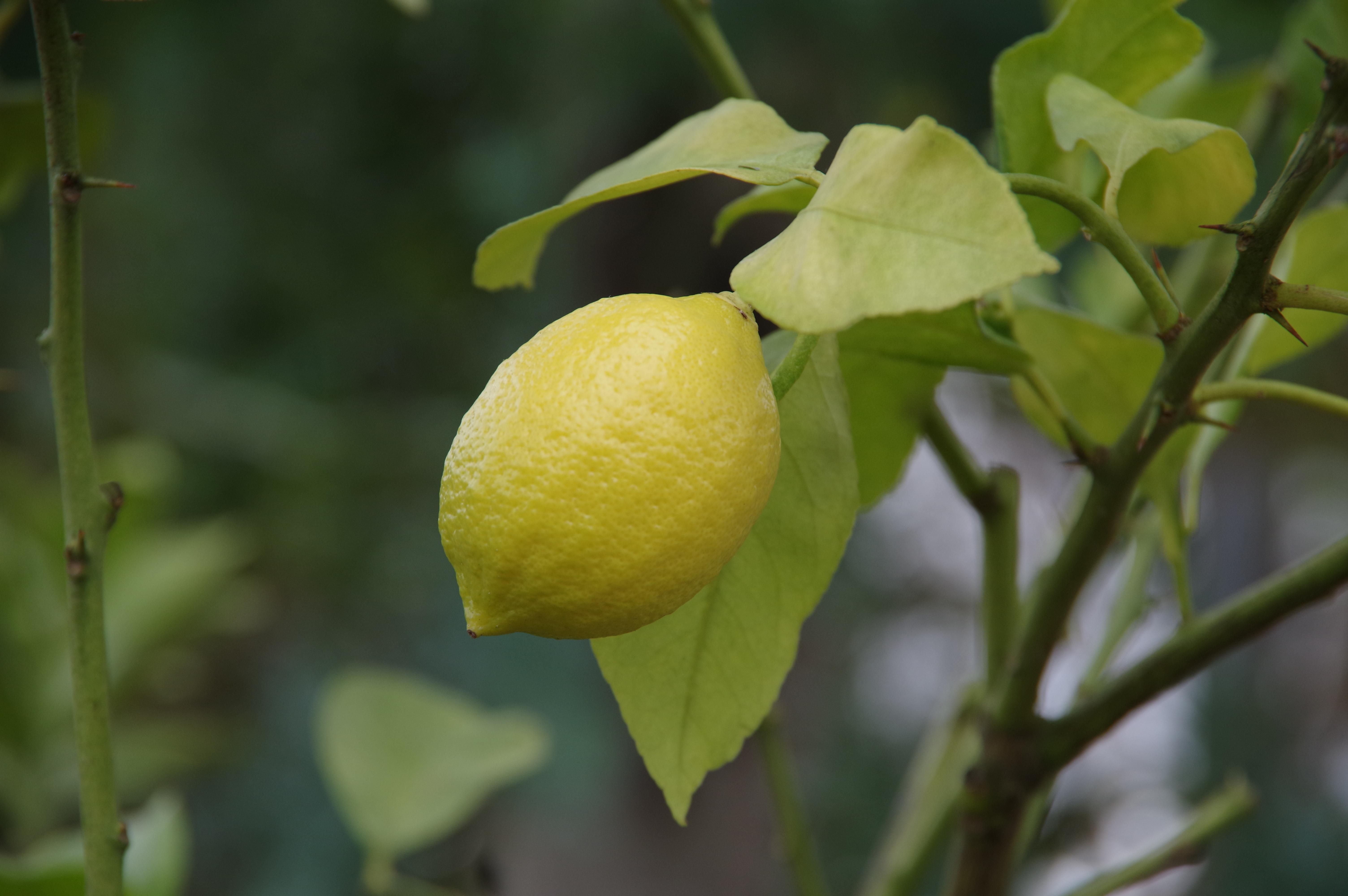 レモン/ユーレカ