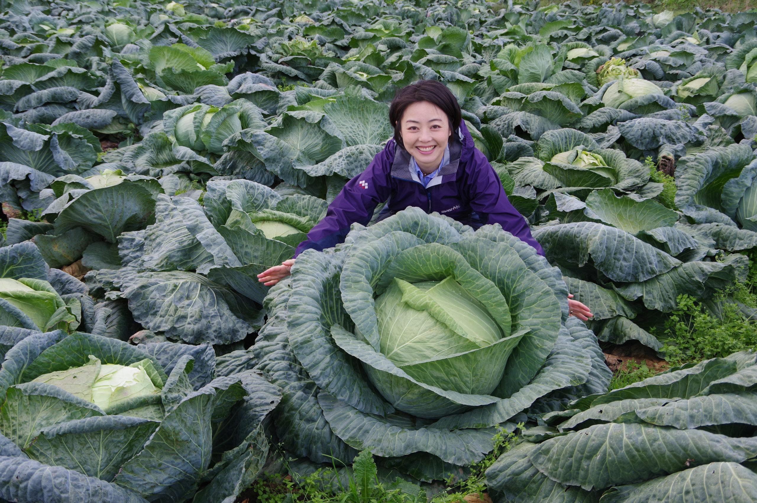 巨大キャベツ「札幌大球」~北海道の伝統野菜を訪ねて~
